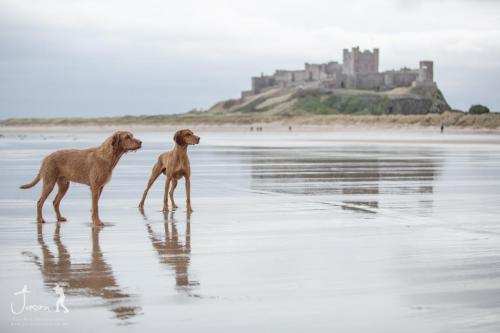 Boys at Bamburgh