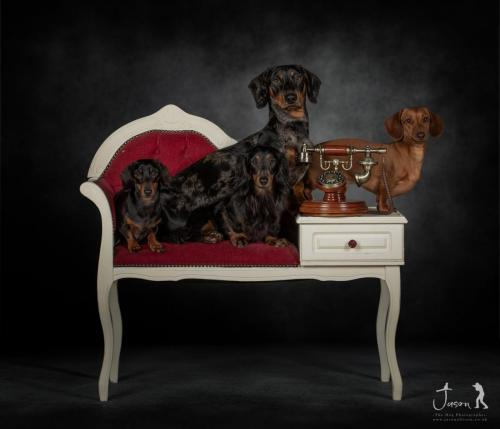 """The Regal Dachshunds"""